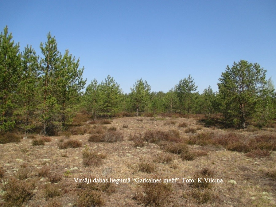 """Dabas lieguma """"Garkalnes meži"""" dabas aizsardzības plāna sabiedriskās apspriešanas protokols"""